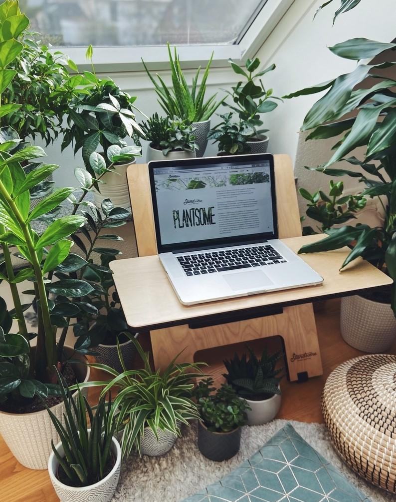 Standsome Arbeitsplatz mit Pflanzen