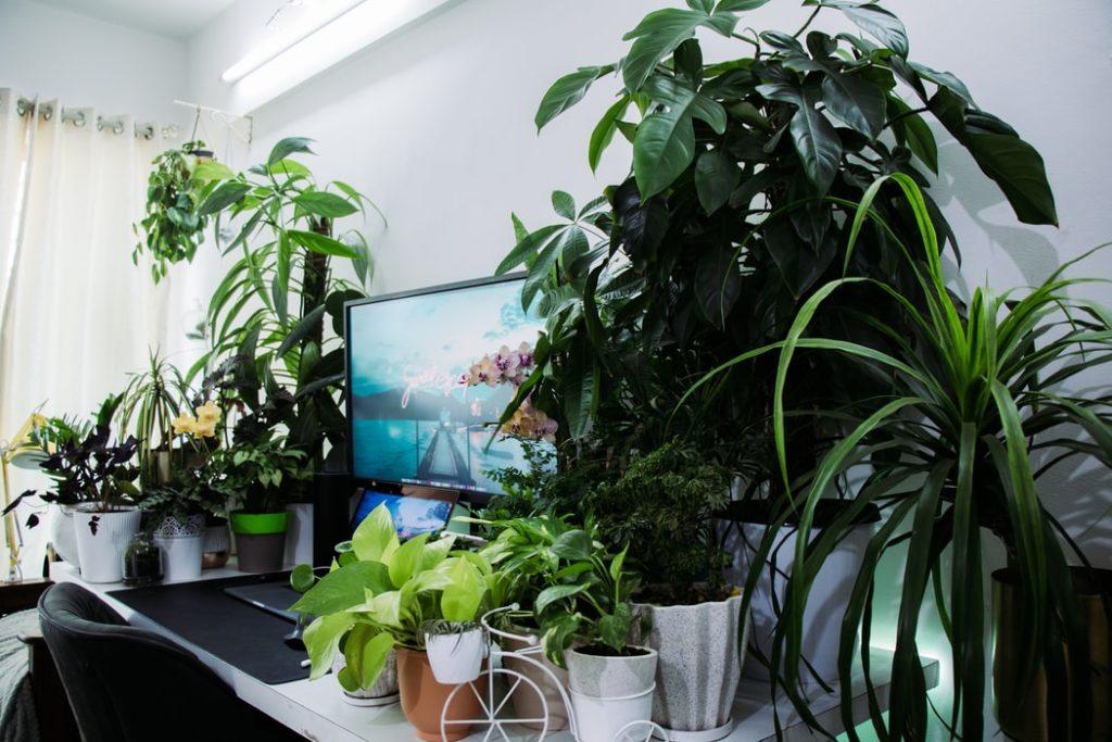 bueropflanzen - Arbeitsplatz mit Pflanzen