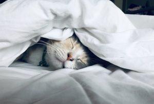 Schlaf als Immunsystem Staerkung
