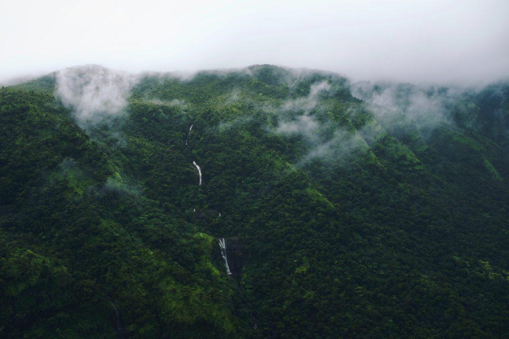 Nebelregenwald